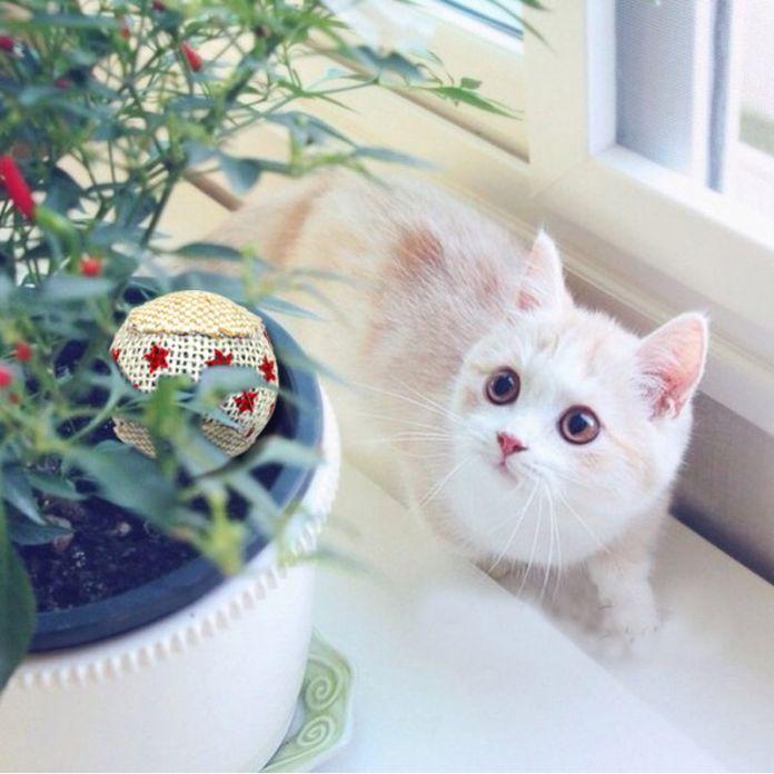 4 шт./упак. Кошка Интерактивные Мяч Игрушка Котенок Жевательная Дребезжащий Звук Игрушки Пэт Полые Шары